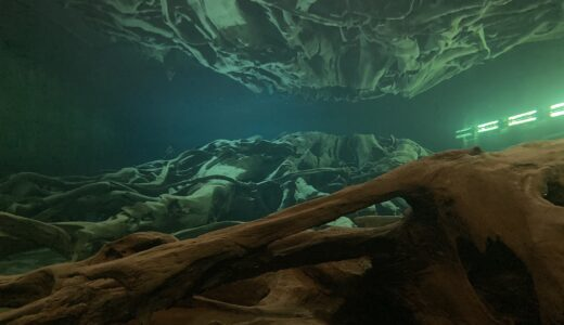 水に沈んだ3000年前の森【魚津埋没林博物館】